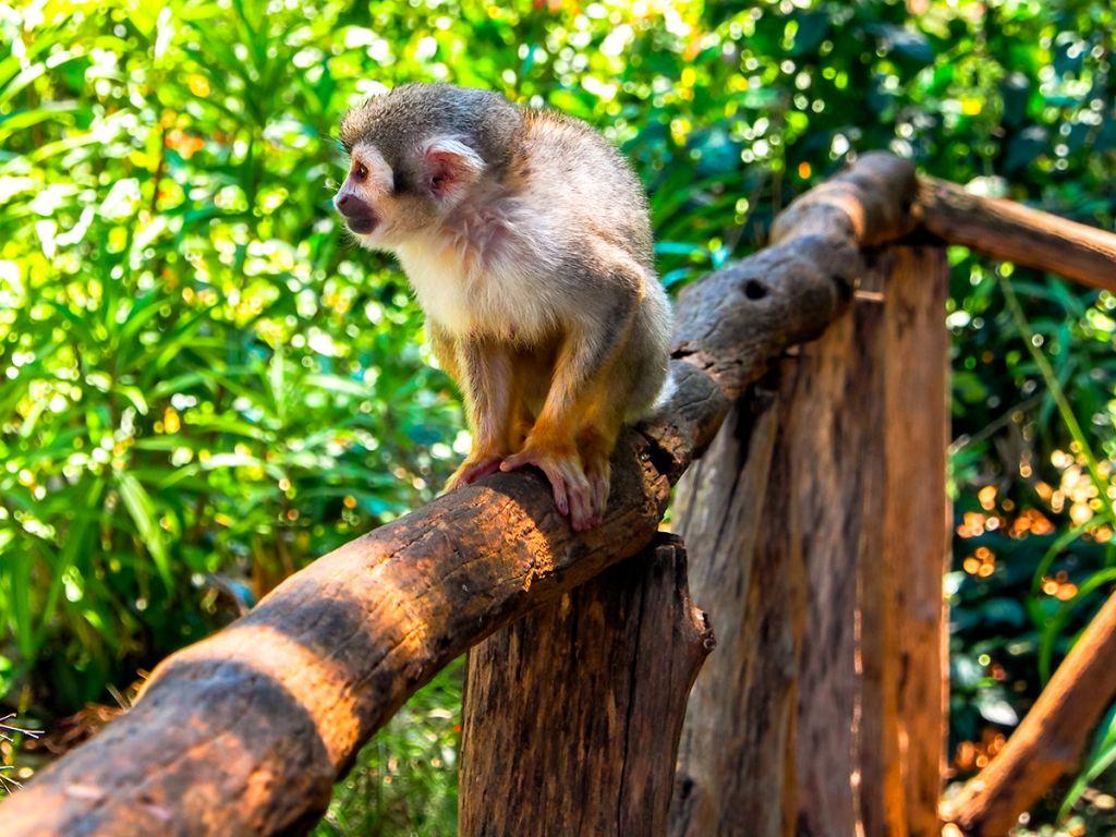 the Monkey Jungle